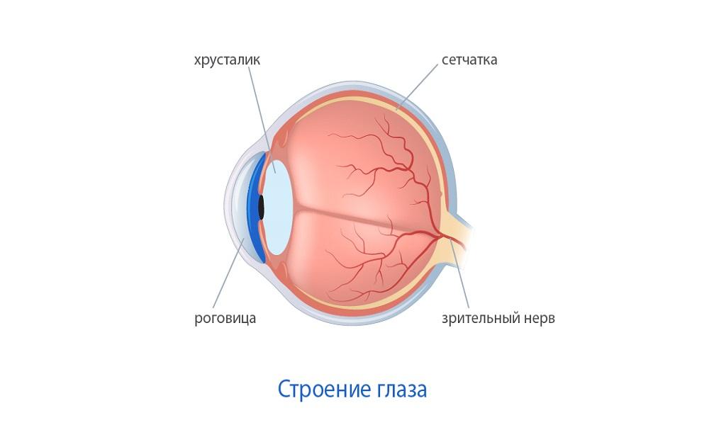 Утолщение роговицы глаза последствия thumbnail